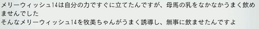 2015 1周目 2013 牧美幼駒出産立ち会い2